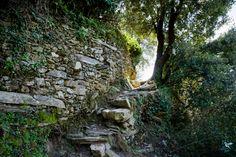Cinque Terre: Urlaubsplanung!   Hier wohnt das Glück Cinque Terre, Plants, Blog, Italian Houses, Budget Travel, Bike Rides, Colorful Houses, Tourism, Planters
