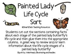 A six page packet of a Painted Lady Butterfly Life Cycle sort project. Students cut out the boxes and then glue them into the appropriate column for each stage of a painted lady butterfly's life cycle. A great way to review information or to build background information about each stage of the painted lady butterfly's life cycle. Also includes a diagram of the life cycle for students to complete. Includes an answer key for the chart!