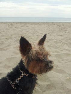 ahhh la plage...