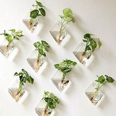 Mkono 2 Pack Wall Hanging Plant Terrarium Glass Planter, Diamond Fill with small plants, or other decorative objects and use as an eye-catching decorative accent for any space. Ideal for home, offi… Hanging Glass Planters, Hanging Air Plants, Hanging Plant Wall, Plant Wall Decor, Hanging Gardens, Diy Hanging, Metal Wall Decor, Hanging Baskets, Indoor Plant Wall