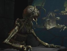 Real Alien Insectoid Encounters | The Fortean Slip