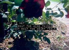 Love is not what the mind thinks but what the heart feels