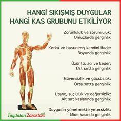 Faydaları ve Zararları - www.corek-otu-yagi.com  #beslenme #pratikbilgiler #sağlık #sağlıklıbeslenme #sağlıklıyaşam Memes, Health, Acupuncture, Health Care, Meme, Salud