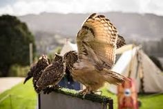 Arte da falcoaria portuguesa já é Património Imaterial da Humanidade. O falcão-peregrino (Falco peregrinus) é uma ave de rapina diurna de médio porte que pode ser encontrada em todos os continentes excepto na Antárctida. A espécie prefere habitats em zonas montanhosas ou costeiras, mas pode também ser encontrado em grandes cidades como Nova Iorque.O falcão-peregrino é um caçador solitário que ataca outras aves,  É o animal mais rápido do mundo, com velocidade de mergulho a 320 km/h.