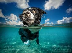 Popular on 500px : Caribbean Dog by dogbreathphotography