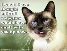 One can dream, right? ADOPTED!!! #cats #funny