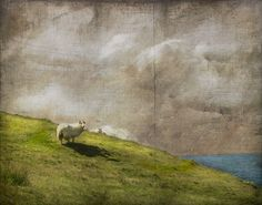 Do you see what I see? by jamie heiden, via Flickr