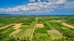 Pimarily Green by rachdian - ViewBug.com