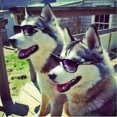 Hustlin Huskies