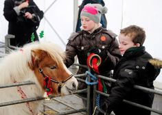 Saying hello at the Christmas Fair and Foal Show. — at National Museum Of Rural Life in Scotland