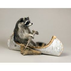 Raccoon Canoeing Taxidermy Mount~too awesome! Bad Taxidermy, Taxidermy Decor, Taxidermy Display, Deer Mounts, Animal Skeletons, Animal Bones, Carnival Of The Animals, Animal Heads, Squirrel