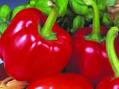 Plant World Seeds Growing Vegetables, Fruits And Vegetables, Veggies, F1, Seeds, Stuffed Peppers, Posts, Blog, Beauty