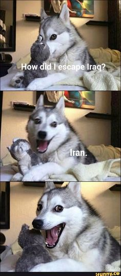 17 Pun Dog Puns That Will Instantly Brighten Your Day Funny Dog Jokes, Corny Jokes, Crazy Funny Memes, Really Funny Memes, Funny Relatable Memes, Haha Funny, Dad Jokes, Hilarious, Animal Humour