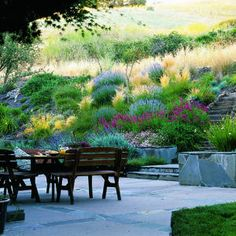 Backyard inspiration (sunset magazine) in Lafayette, CA California-appropriate plants, including California fescue, carex, catmint, coral bells, erigeron, 'Garnet' penstemon, lavender, Mexican bush sage, 'Morning Light' miscanthus, rosemary, and species geraniums.