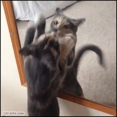 """Animated CAT GIF • Funny weird Cat trying to hug and kiss herself on mouth, in the mirror. """"My cat is such a weirdo."""""""