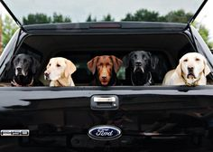Dogs and their favorite Ford Truck.