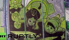 Au Japon, des champs de riz transformés en immenses oeuvres artistiques !