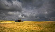 Storm clouds approaching a field of barley in Wiltshire, England