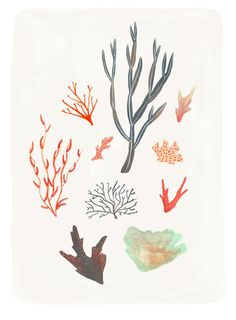 One of the ingredients in our products is an extract from seaweed – Phycosaccharide It calms irritation and fights aging by repairing skin damage. Lovely illustration by Alice Ferrow! Design Graphique, Art Graphique, Art And Illustration, Love Art, Art Inspo, Illustrators, Contemporary Art, Street Art, Artsy