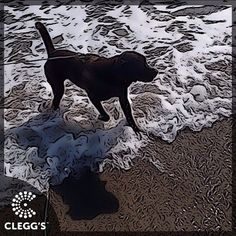 Just a little time at the beach! Creativity provided by the help of the Prisma App #pestcontrolservice #pestcontrol #pest #bugs #insect #insects #bug #bugs #ladybug #butterfly #bedbugs #bedbugdog #dogs #dogslife #dogstagram #dogsofinstagram #dogsrule #follow #instagood #northcarolina #northcarolinaliving #carolinas #dogmom #doglover #labrador #labsofinstagram #carolinamom #happy #smile #fun