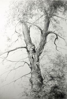 Pencil Drawings Of Love, Pencil Sketch Drawing, Amazing Drawings, Pencil Art Drawings, Realistic Drawings, Tree Sketches, Nature Sketch, Nature Artists, Landscape Drawings