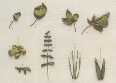 как вышить листики зелеными лентами                                                                                                                                                                                 More