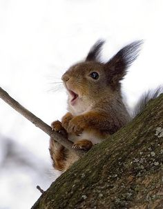 Silly squirrel!