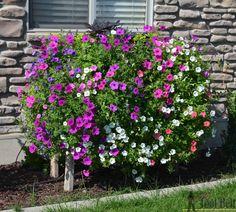 6 Aug 24 cascading flower palley planter