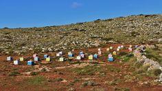 Kythera Top 20 | Guesthouse Xenonas Fos ke Choros | a Greek island  Local Products