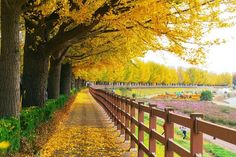 Fall foliage forecast Korea 2019 — 16 best place to see autumn leaves in Korea - Living + Nomads – Travel tips, Guides, News & Information! Beautiful World, Beautiful Places, Beautiful Pictures, Autumn In Korea, Amazing Nature, Autumn Leaves, Autumn Fall, Fallen Leaves, Places To See
