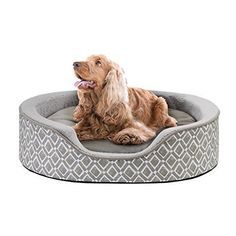 Intelligent Design Oval Cuddler Grey ** For more information, visit image link. (This is an affiliate link) Bolster Dog Bed, What Dogs, Cool Dog Beds, Happy Animals, Pet Beds, Cuddles, Westies, Training Your Dog, Dog Care