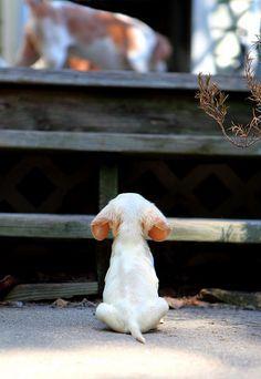 // KaufmannsPuppyTraining.com // Kaufmann's Puppy Training // dog training // dog love // puppy love // http://www.poochportal.com/