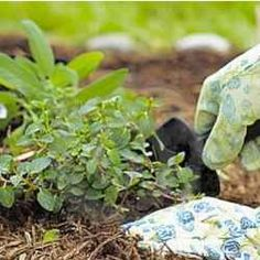 101 Gardening Secrets Experts Never Tell You...so many good tips!!!!