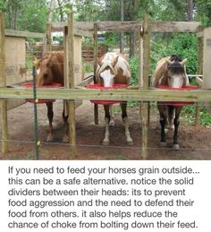 If you need to feed your horses grain outside. this can be a safe alternative. notice the solid dividers between their heads: its to prevent food aggression and the need to defend their food from others. Paddock Trail, Horse Feeder, Hay Feeder, Underwater Dogs, Horse Shelter, Goat Shelter, Horse Property, Dream Barn, Horse Stalls