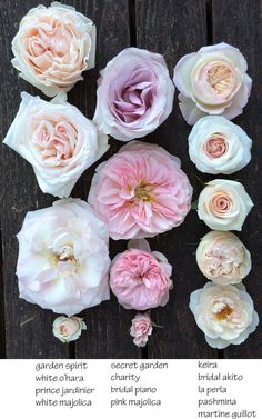 English Roses Flirty Fleurs Blush Pink Roses - Thoughtful musings of florists who adore florists and flowers. Light Pink Flowers, Pretty Flowers, Colorful Flowers, Exotic Flowers, Yellow Roses, Light Pink Rose, Hortensia Rose, Blush Roses, Blush Pink