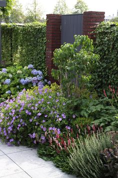 Langs de vaste plantenborder en op weg naar de tuinpoort. We maken mooie tuinen. We make beautiful gardens.