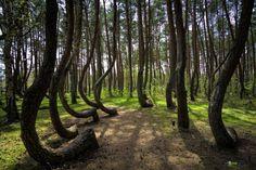 Crooked Forest, na Polônia, por Faberovsky