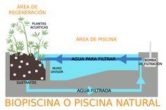 piscina natural o biopiscina