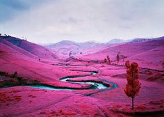 Infrared Landscapes by Richard Mosse