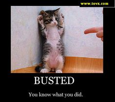 funny posters of cats | 21 Funny Cat Motivational Posters | Find the funniest Cat or Kitten ...
