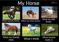 My Horse ... Interpretations