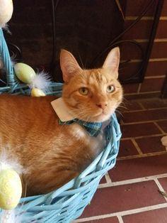 Gilbert the ginger cat