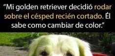 14 Veces que los perritos Golden Retrievers nos demostraron ser los mejores [Vol. 2]