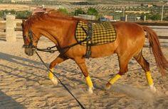 EQUISALUD: LA DOMA A LA CUERDA  El trabajo de un caballo a la...