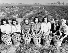 """""""Womens land army at Victory Gardens.""""  Michigan State Univ."""