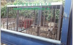 Petition · Plz sign! Prosecution of psychopath who killed countless dogs in Busan Gijang, South Korea · Change.org