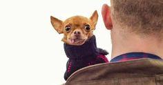 Un estudio científico confirma que a los perros no les gusta que les abracen