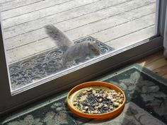 This squirrel in Tannersville is having a hard time reaching the bird seed.