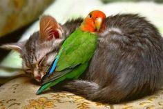 Cat and friend