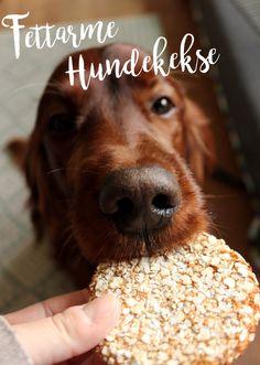 Backen für übergewichtige Hunde #Rezept #Hundekekse